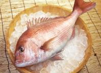 養殖鯛ラウンドmain