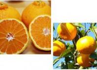 果山園柑橘類