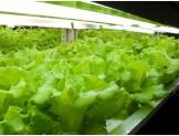 工場野菜sub1